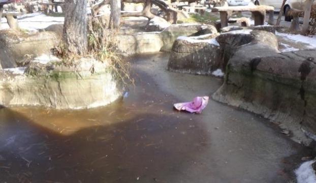 Süs havuzları bile dondu