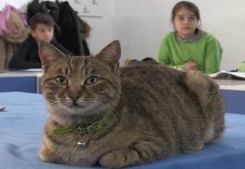 """Kedi """"Tarçın"""" 257'nci öğrenci oldu"""