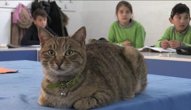 """Kedi """"Tarçın"""" 257nci öğrenci oldu"""