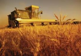 Tarım ÜFE temmuzda azaldı