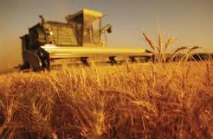 Tarım ÜFE aralıkta arttı