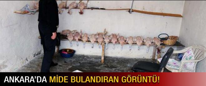Ankara'da mide bulandıran operasyon