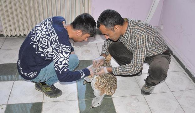 Yaralı toy kuşu Elazığda tedavi altına alındı