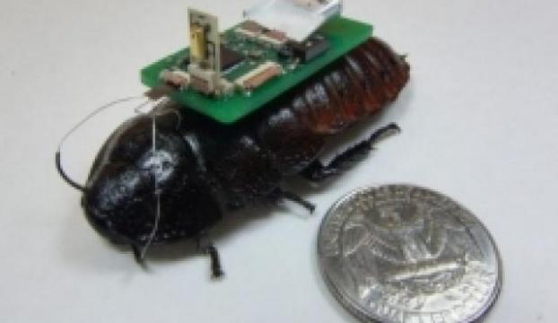 Karşınızda Böcekbot