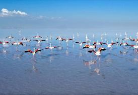 Flamingoların yaşam cenneti: Tuz Gölü