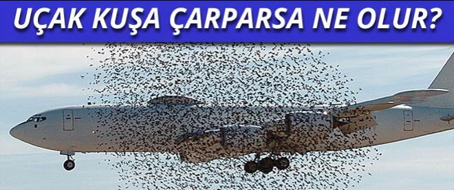 Uçak kuşa çarparsa ne olur?