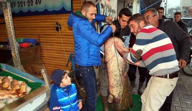 Baraj gölünde 81 kiloluk yayın balığı yakalandı