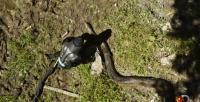Kendini anakondaya yem etti