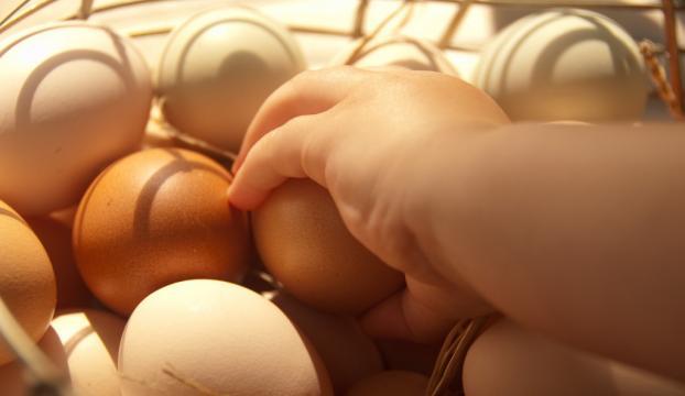 Gıdada Temmuz ayının zam şampiyonu yumurta oldu