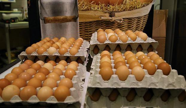 Avrupada böcek ilaçlı yumurta skandalı