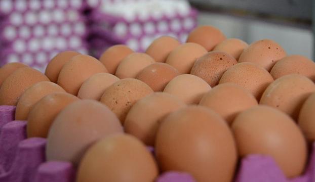 Böcek ilaçlı yumurtalara Macaristanda da rastlandı