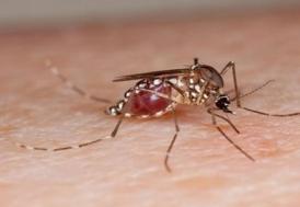 Teksas'ta Zika vakası