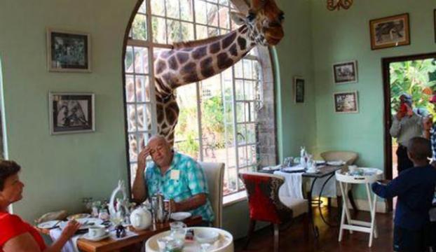 Zürafayla kahvaltı yapmak ister misiniz ?